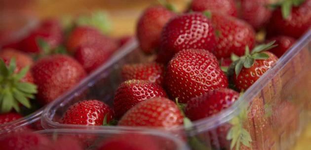 de marché dordogne fraises du périgord