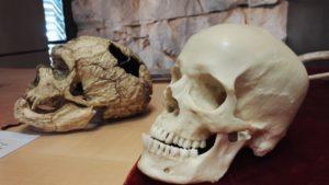Maison du Piage, les crânes